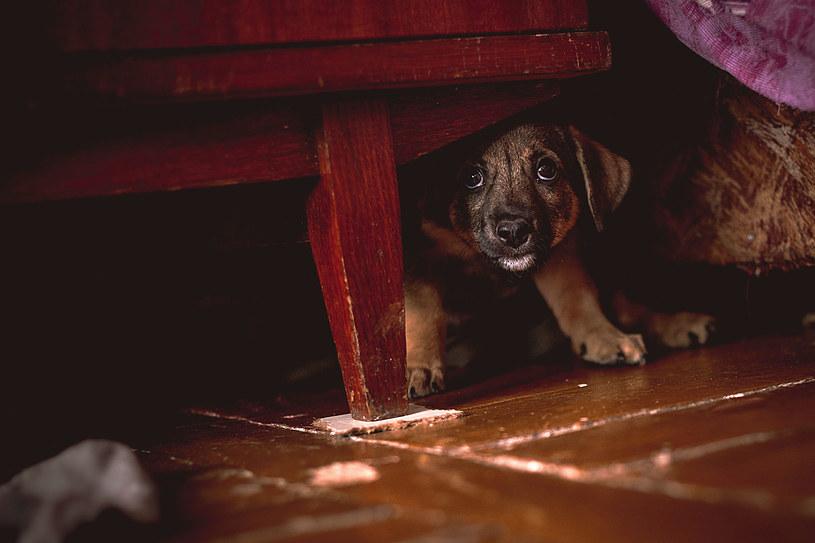 Nie strzelaj w sylwestra! Dla zwierząt to przerażające doświadczenie /123RF/PICSEL