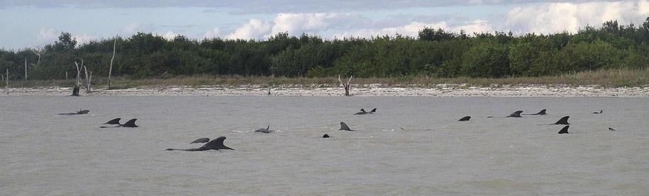 Nie wiadomo, co przyczyniło się do zabłądzenia wielorybów /National Park Service /PAP/EPA