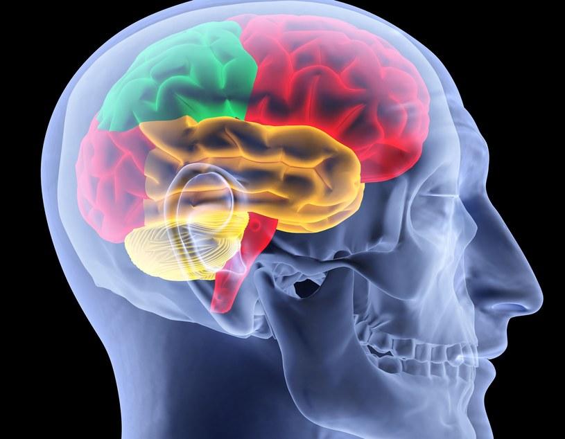 Nie wiadomo, dlaczego nasz organizm produkuje halucynogenną substancję. Może być to związane z procesem uczenia się. /123RF/PICSEL