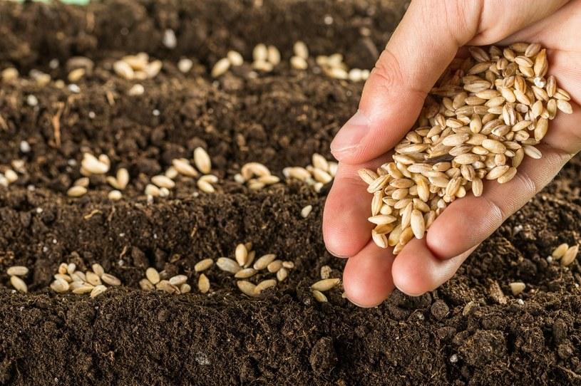 Nie wszystkie nasiona są odpowiednie /123RF/PICSEL