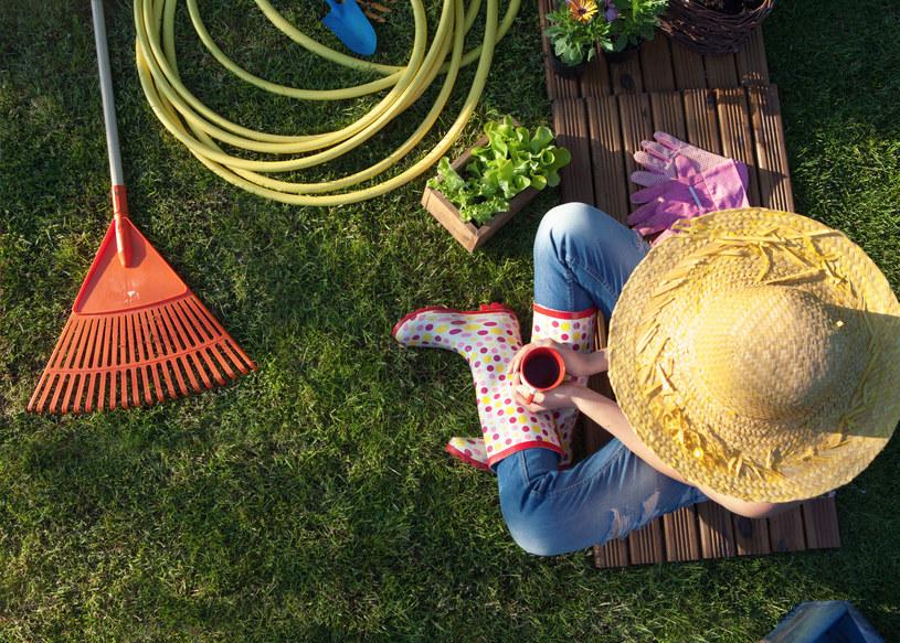 Nie wszystkie rośliny zimozielone są zielone, znajdziesz wśród nich krzewy złociste, w odcieniach błękitu czy dwukolorowe /123RF/PICSEL