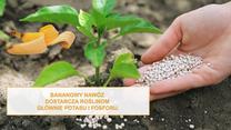 Nie wyrzucaj skórek bananów. Dzięki nim rośliny łatwiej zniosą mrozy lub suszę