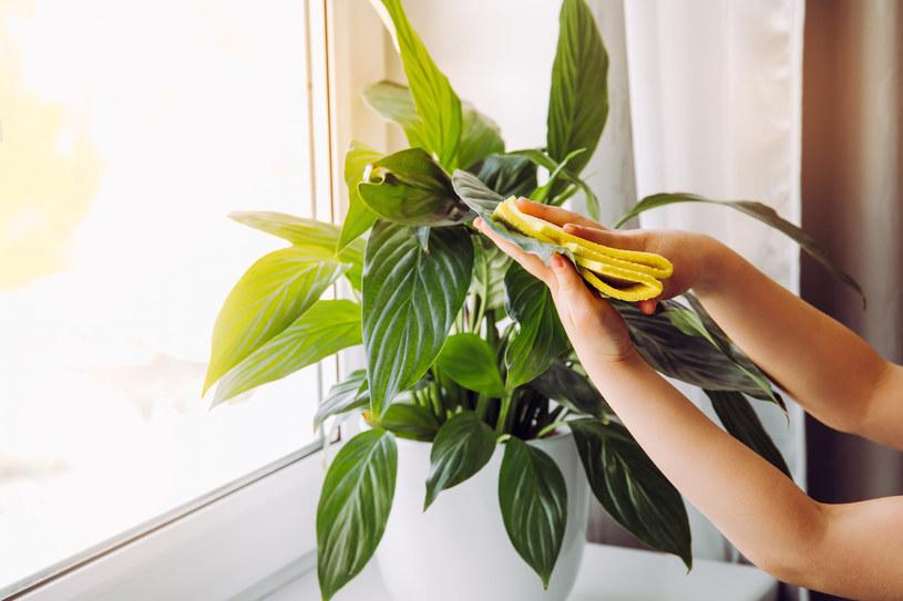Nie zwlekaj, gdy zauważysz, że z twoją rośliną dzieje się coś niedobrego /123RF/PICSEL