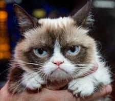 Nie żyje najsłynniejszy kot internetu - Grumpy Cat