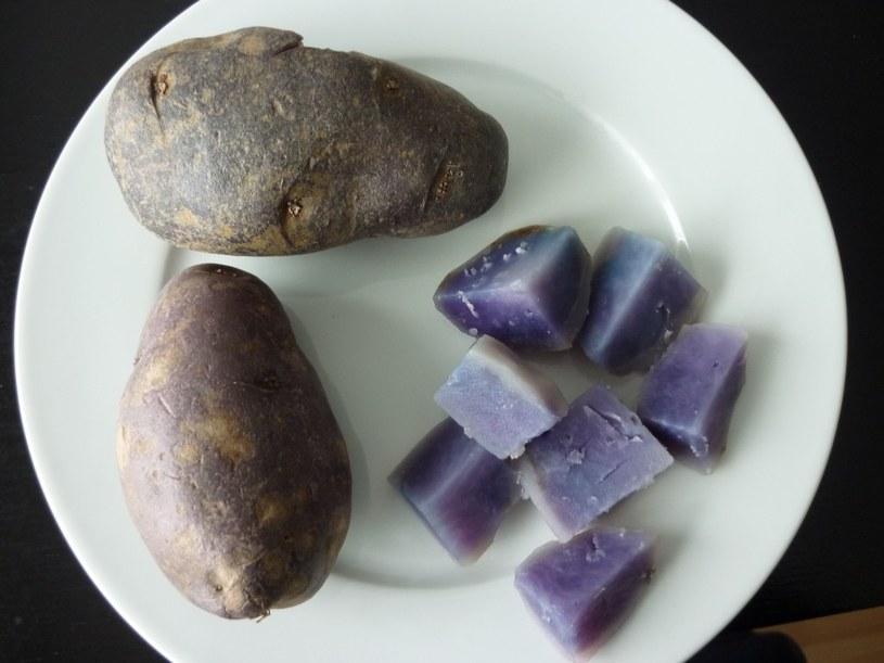 niebieskie ziemniaki /© Photogenica