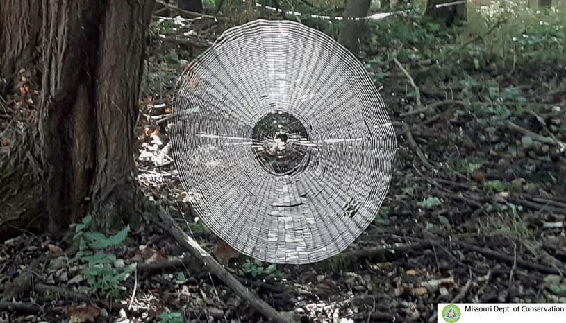 Niebywała pajęczyna z Missouri - jej rozmiar działa na wyobraźnię /materiały prasowe