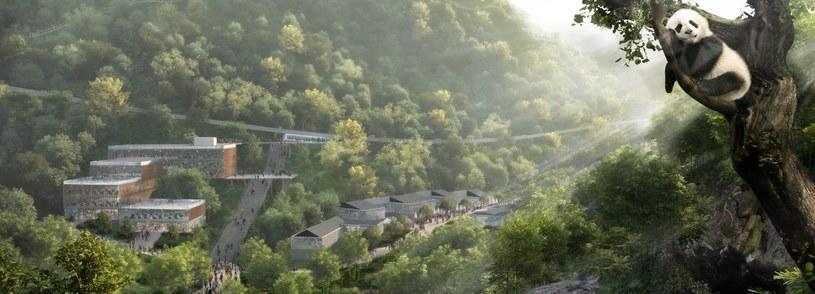 Niedaleko Chengdu powstanie niezwykły rezerwat przyrody dla pand /materiały prasowe