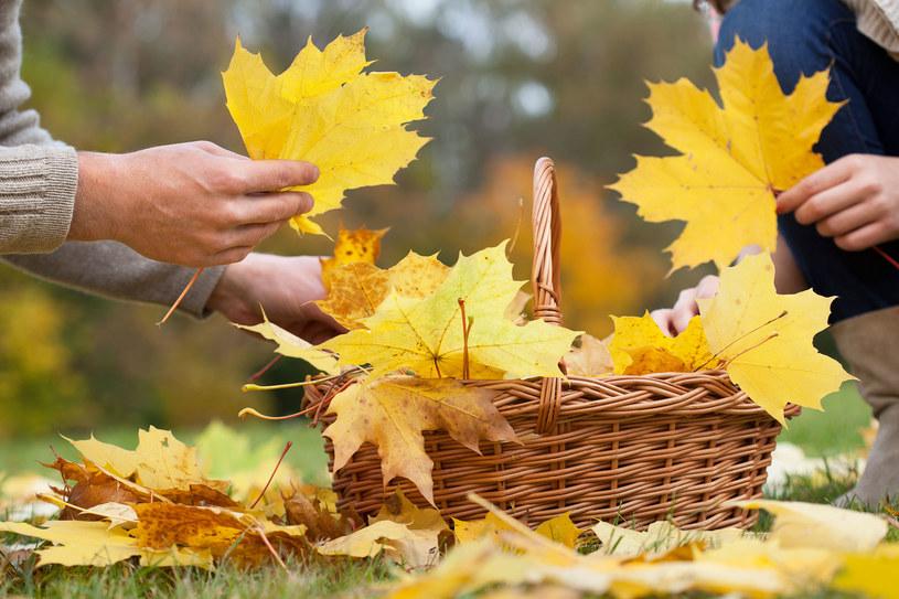 Niedziela będzie idealnym dniem na jesienny spacer /123RF/PICSEL
