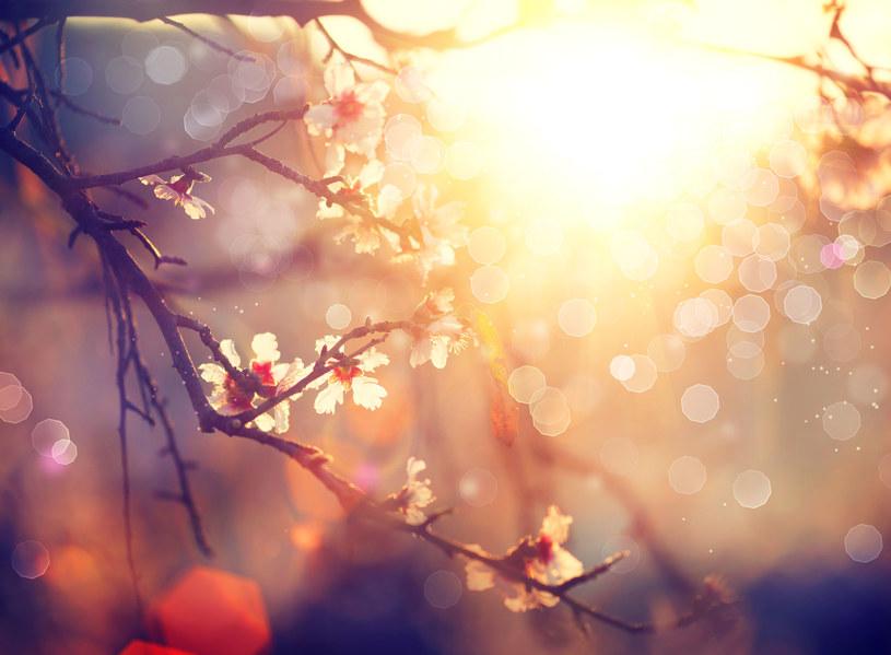 Niedziela upłynie pod znakiem wiosennej aury /123RF/PICSEL