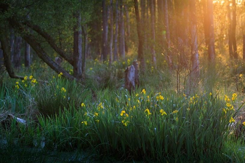 Niedzielny spacer po lesie? Śmiało! /ADAM LAWNIK /East News