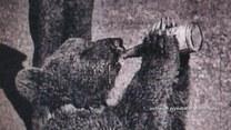 Niedźwiadek Wojtek - żołnierz generała Andersa