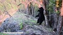 Niedźwiedź oddaje się krótkiej przyjemności. Co go odpręża?