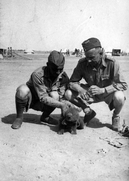 """14.04.1942, Ahwaz, polscy żołnierze bawiący sie z niedźwiadkiem - prawdopodobnie jest to mlody """"Wojtek"""""""