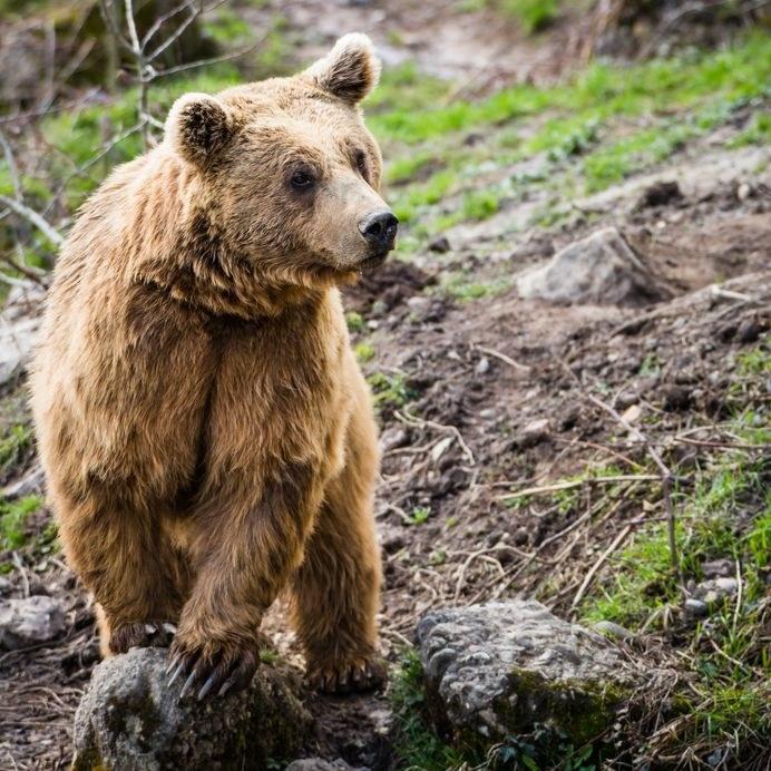 Niedźwiedź /©123RF/PICSEL