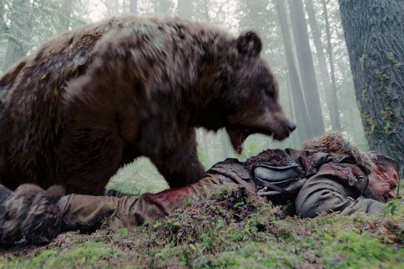 """Niedźwiedzica konta """"boski Leo"""". Zwycięzca mógł być tylko jeden! /materiały prasowe"""