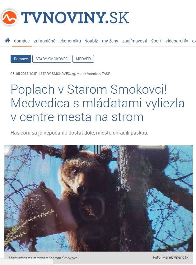 Niedźwiedzica z małymi boi się zejść z drzewa /Zrzut ekranu