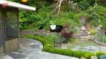 Niedźwiedzica z młodymi skorzystali z fontanny w ogrodzie