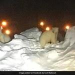 Niedźwiedzie polarne biegające po lotnisku? Takie cuda tylko na Alasce