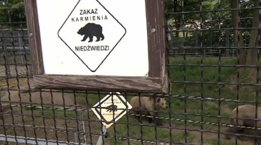 Niedźwiedzie wcale nie są takie potulne, na jakie wyglądają /TVN24/x-news