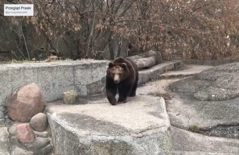 Niedźwiedzie wyszły na spacer w środku lutego /facebook.com