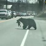 Niedźwiedzie zatamowały ruch. Nietypowe zdarzenie na drodze
