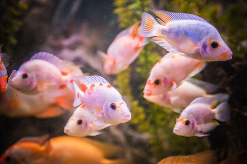Niektóre gatunki wolą życie stadne /©123RF/PICSEL