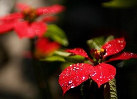 Niektóre rośliny mogą być niebezpieczne dla kota /AFP