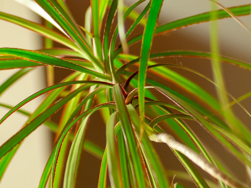 Niektórym roślinom obecnym w domu, nadmiar promieni słonecznych może zaszkodzić