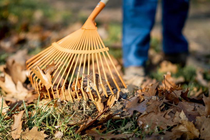 Niektórzy zapominają, że o trawnik należy dbać również wtedy, gdy temperatura zaczyna spadać /123RF/PICSEL