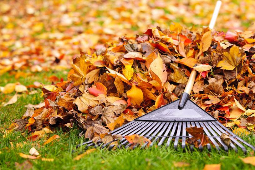Niektórzy zastanawiają się, jak wykorzystać nadmiar liści w ogrodzie /123RF/PICSEL