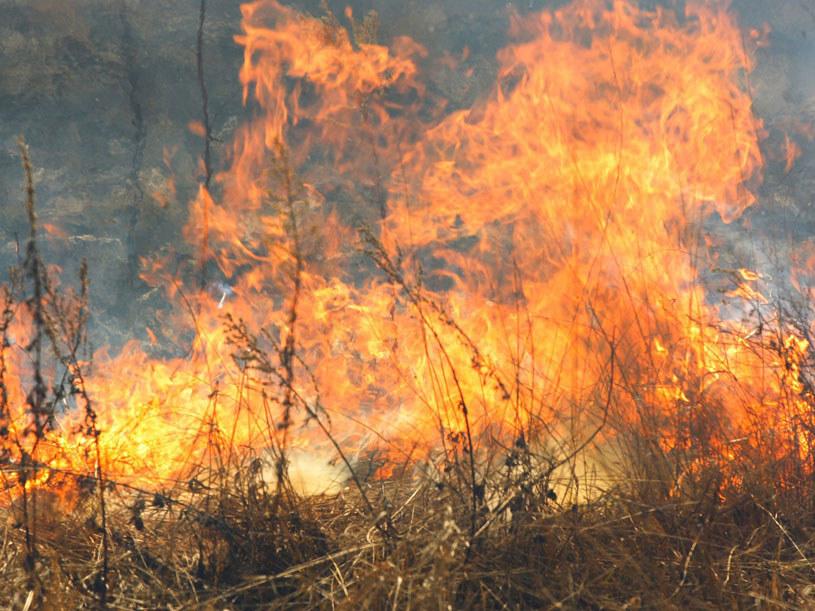 Niemal we wszystkich lasach w kraju obowiązuje najwyższy stopień zagrożenia pożarowego/ Zdjęcie ilustracyjne /123RF/PICSEL