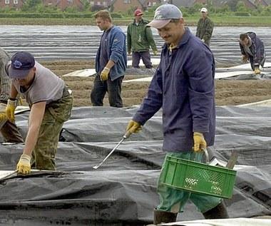 Niemiecka prasa: Czy płaca minimalna uderzy w pracowników sezonowych z Polski?