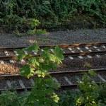 """Niemiecka prasa krytykuje Polskę za sposób informowania o """"złotym pociągu"""""""