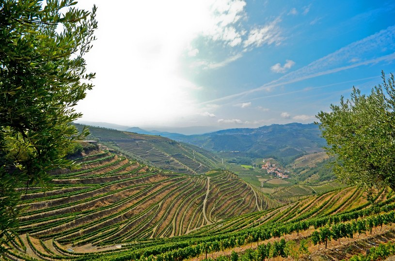 Nieodłączny element malowniczego portugalskiego krajobrazy stanowią winnice; na zdj. dolina rzeki Douro /123RF/PICSEL