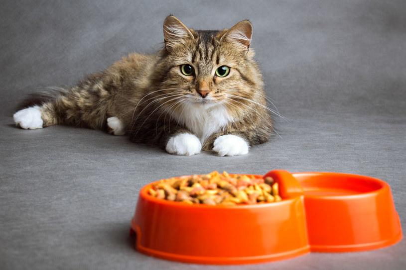 Nieodpowiednie karmienie kota może przysparzać mu ogromnego cierpienia /123RF/PICSEL