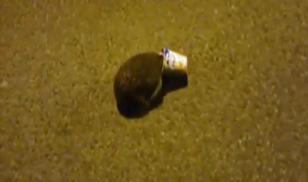 Nieodpowiedzialne zachowanie jeża mogło mieć tragiczne skutki /Policja