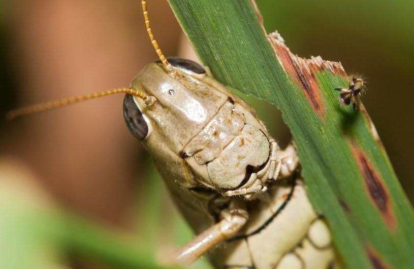 Niepozorne owady wskazały winnego bestialskiej zbrodni /123RF/PICSEL