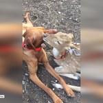 Niesamowita przyjaźń psa z jelonkiem