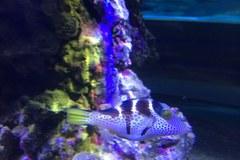 Niesamowite ryby z akwarium w Gdyni