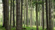 Niespotykaną od 50 lat roślinę odnaleziono w Puszczy Piskiej