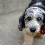 Niestrawność u psa: Co może ją powodować?