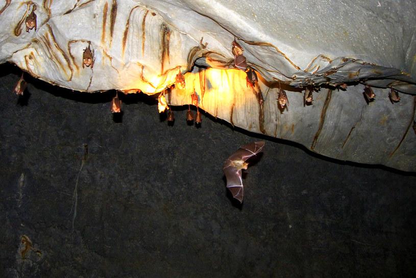 Nietoperze w Parku Narodowym Rzeki Podziemnej Puerto Princesa  Fot. Wikipedia,  Jimaggro /materiały prasowe