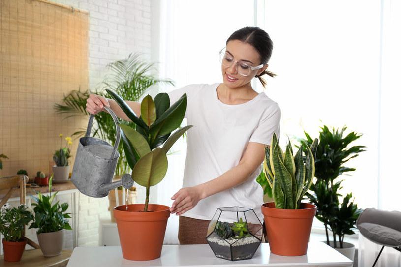Nietrudno sprawić, że roślina będzie przelana /123RF/PICSEL