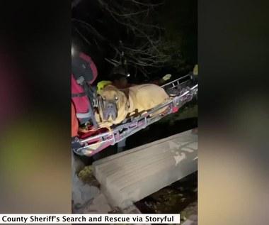 Nietypowa akcja ratunkowa. 90-kilogramowy mastiff utknął w górach