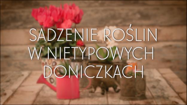 Nietypowe Doniczki Dla Domowych Kwiatów Lifestyle W Interiatv