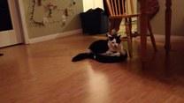 Nietypowe zastosowanie odkurzacza przez kota