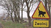 Nietypowy znak drogowy poprawi bezpieczeństwo kotów?