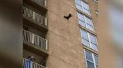 Nieudana wspinaczka szopa pracza. Spadł z 9. piętra