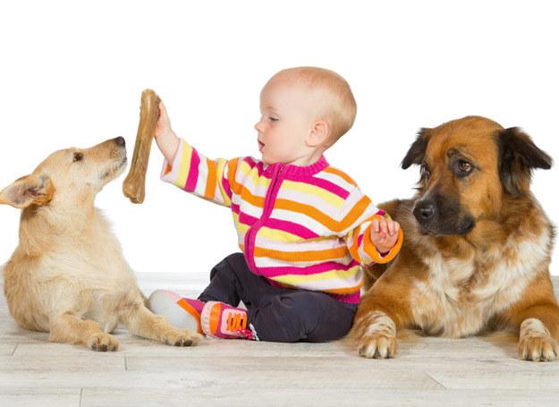 Niezależnie od tego, jakie nastawienie ma nasz pies do innych ludzi, przyjacielskie czy raczej nieufne, zawsze należy przygotować go na zmiany związane z pojawieniem się niemowlęcia. /123RF/PICSEL