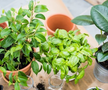 Niezawodne naturalne sposoby na ukorzenianie roślin